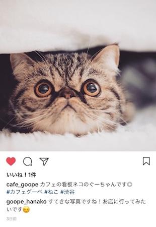 Instagramいいねとコメント